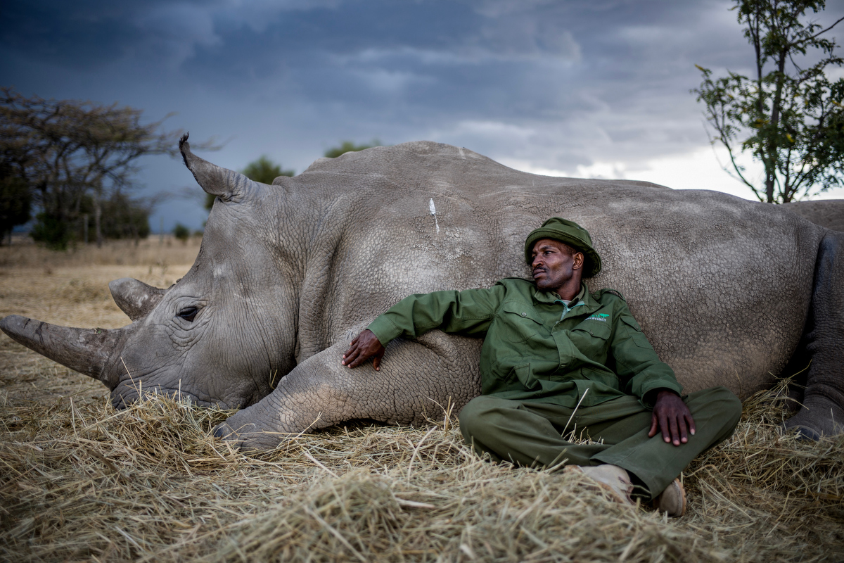 The Last Remaining Nothern White Rhinos_Justin Mott_010.JPG