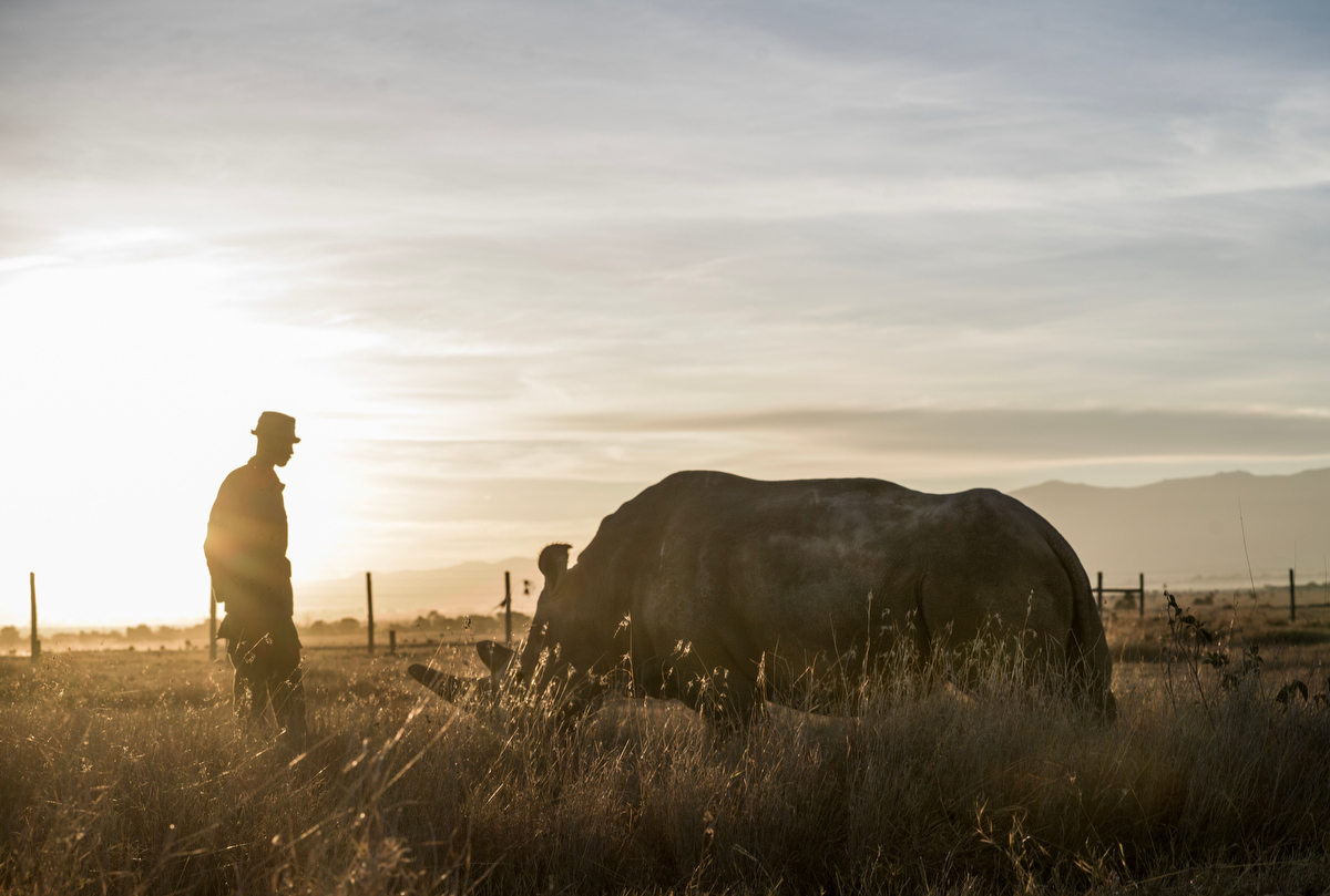 The Last Remaining Nothern White Rhinos_Justin Mott_024.JPG