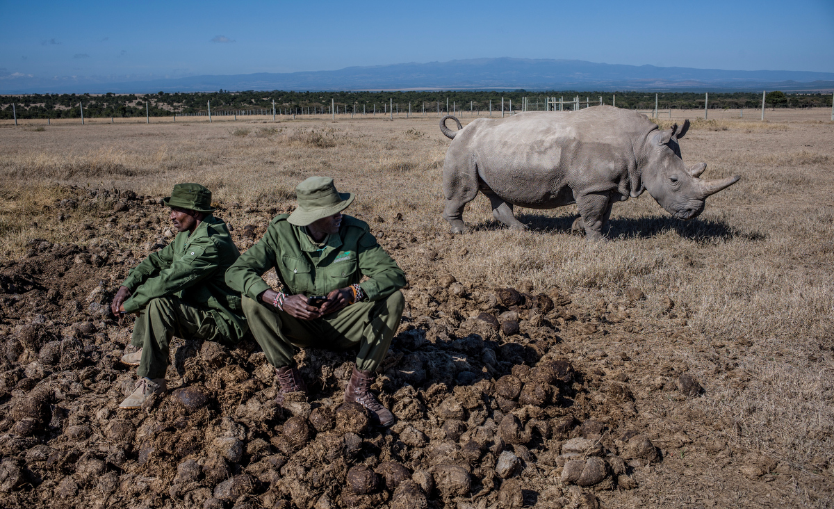 The Last Remaining Nothern White Rhinos_Justin Mott_050.JPG