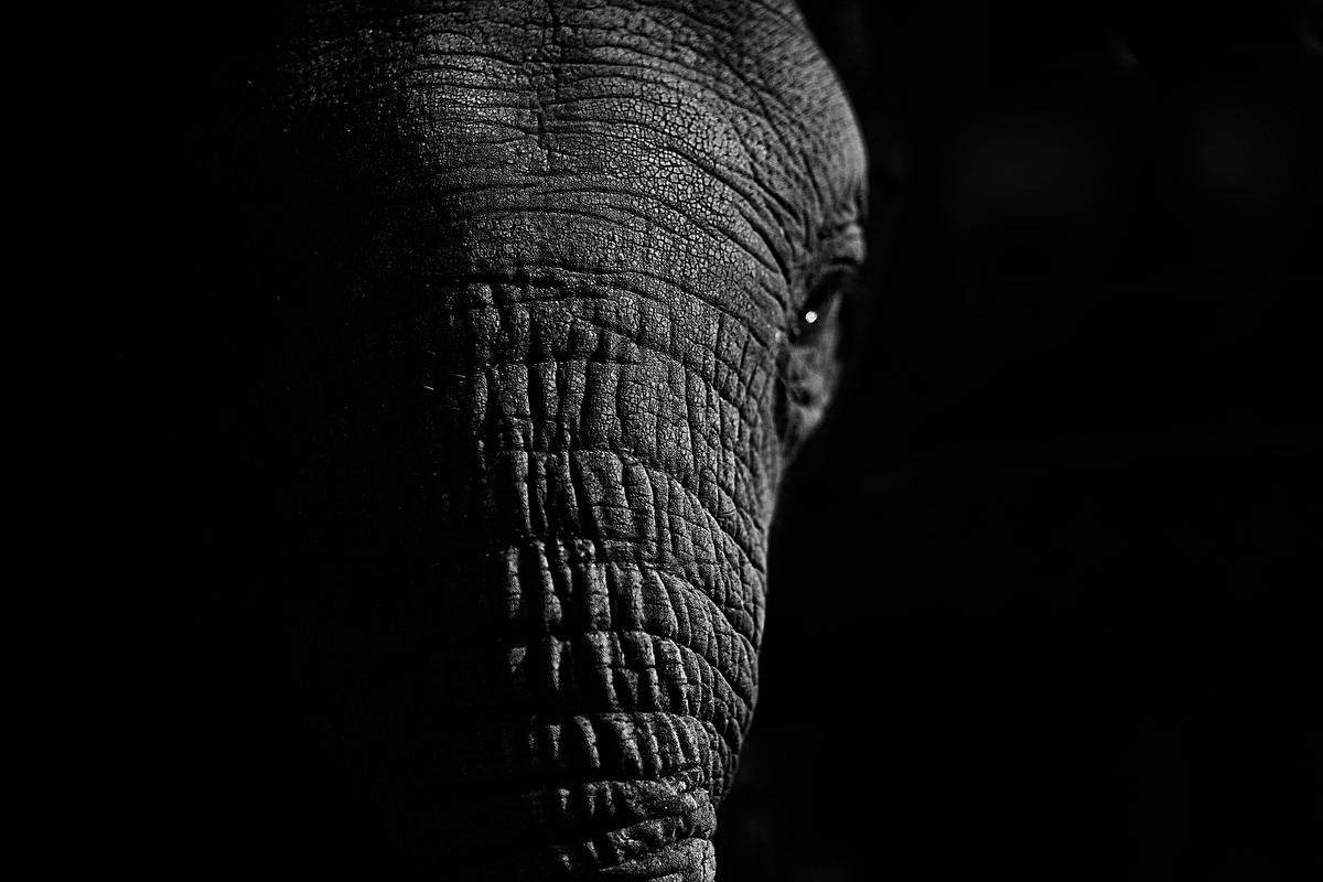 Elephant Story Best_Justin Mott_006.JPG