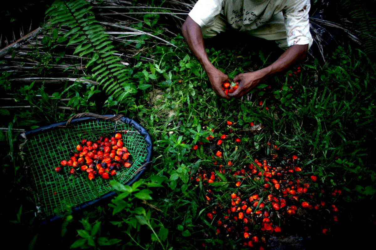 Justin Mott Global Food Crisis4A.jpg