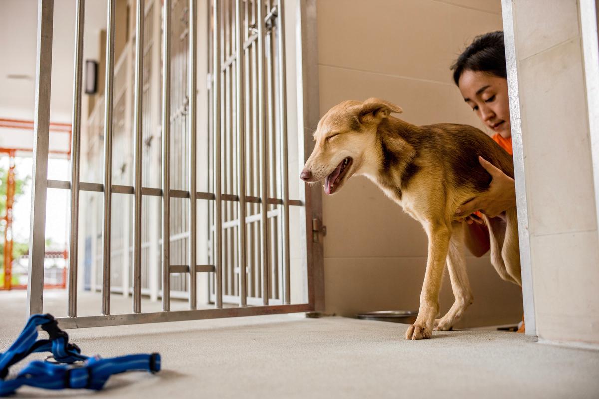 Soi Dog Foundation_Final Story Edit_Print Resolution_007.JPG