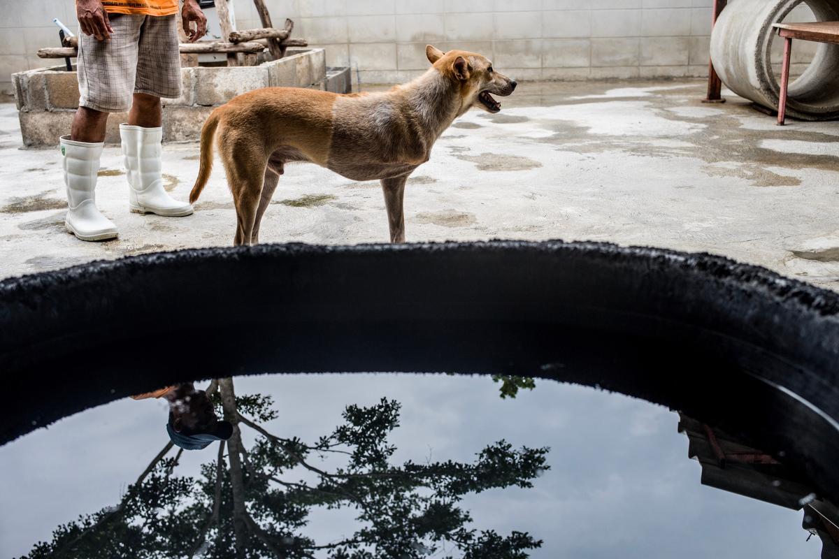 Soi Dog Foundation_Final Story Edit_Print Resolution_032.JPG