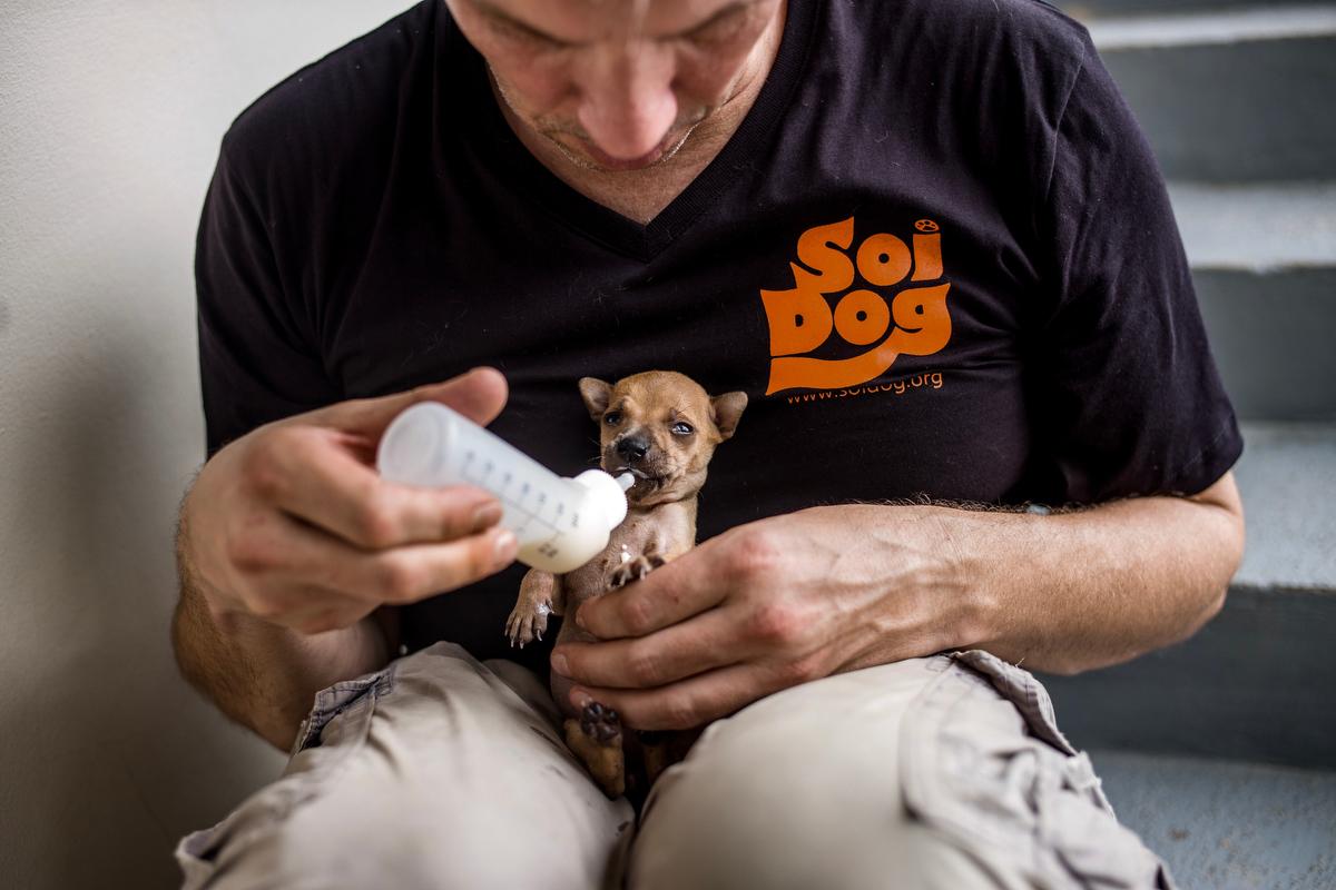 Soi Dog Foundation_Final Story Edit_Print Resolution_034.JPG