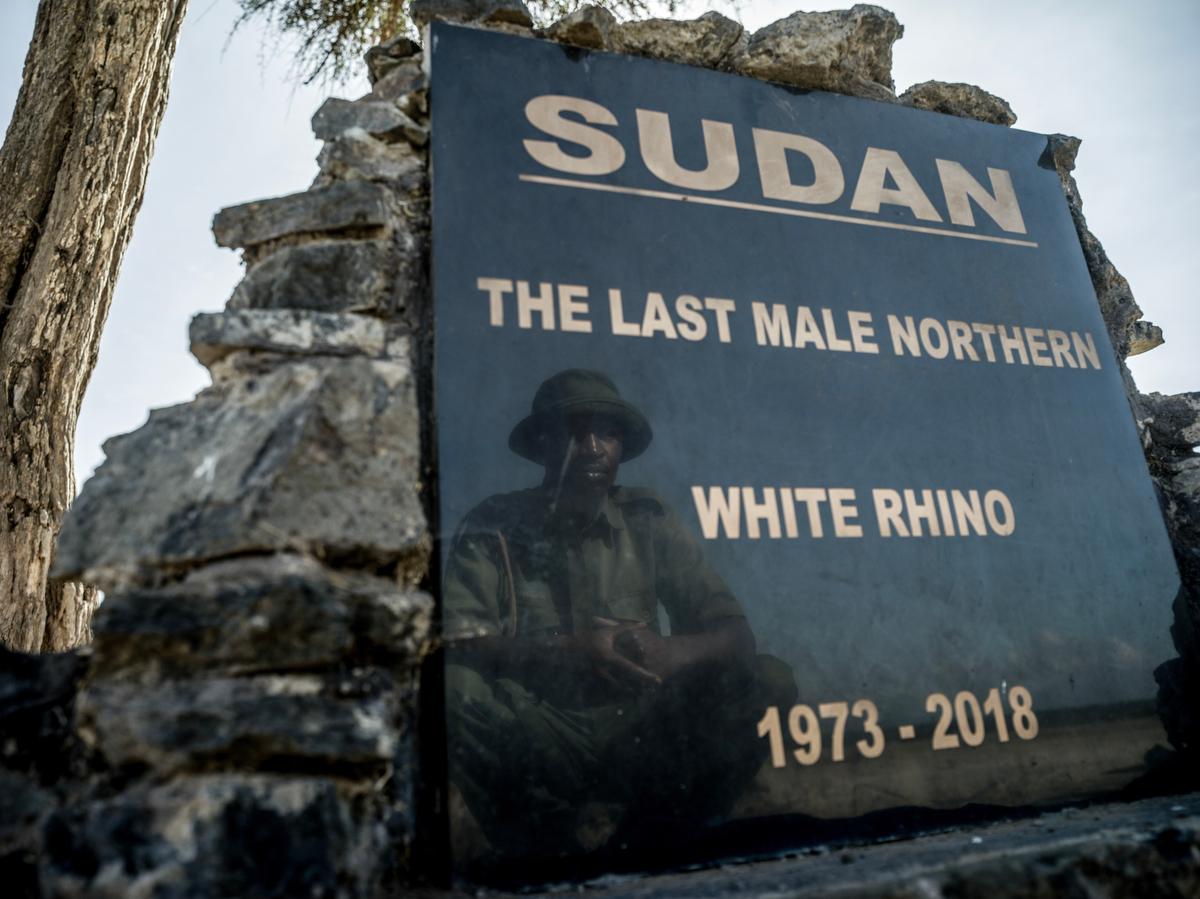 Zacharia Kipkirui, one of the primary rhino caretakers at Ol Pejeta conservancy visits the gravesite of Sudan, the last male northern white rhino who passed away in 2018.