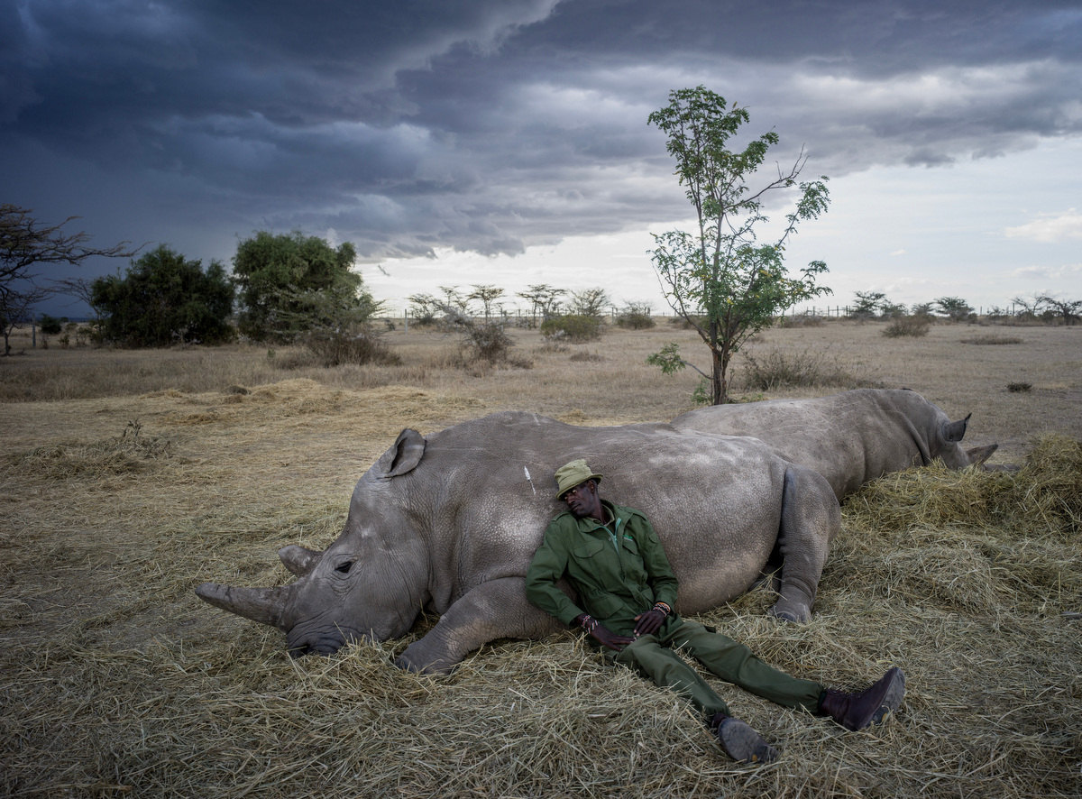 Peter Esegon, 47, one of the primary rhino caretakers relaxes with Najin and Fatu as the sun sets at Ol Pejeta conservancy in Central Kenya.