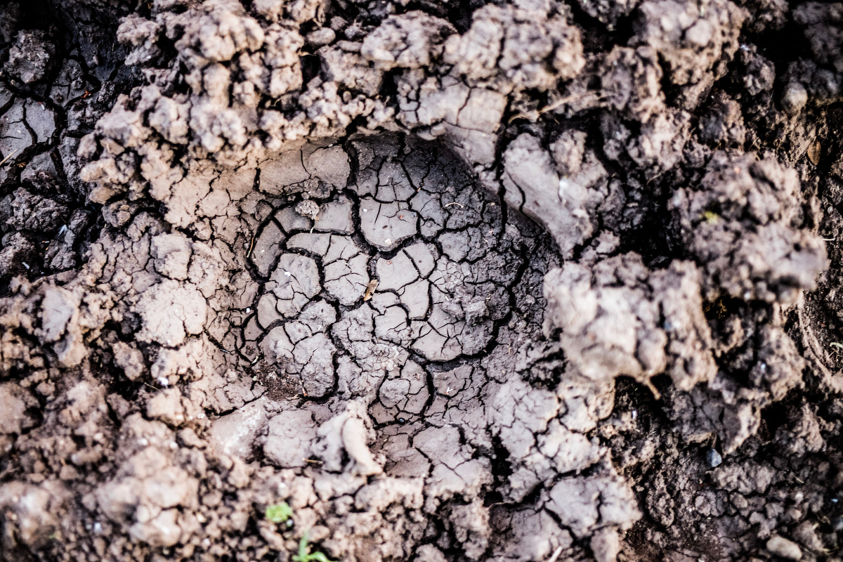 A footprint left in the mood of the holding area of Fatu and Najin, the last two remaining northern white rhinos in the world.