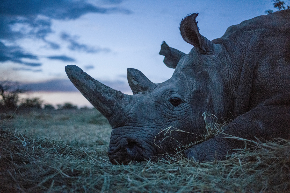 To Serve and Protect_The Last Remaining Northern White Rhinos_by Justin Mott_024.JPG