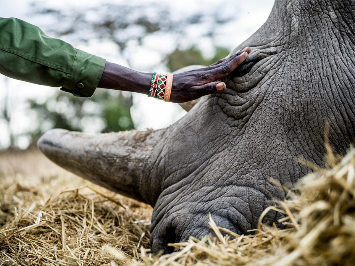 To Serve and Protect_The Last Remaining Northern White Rhinos_by Justin Mott_077.JPG