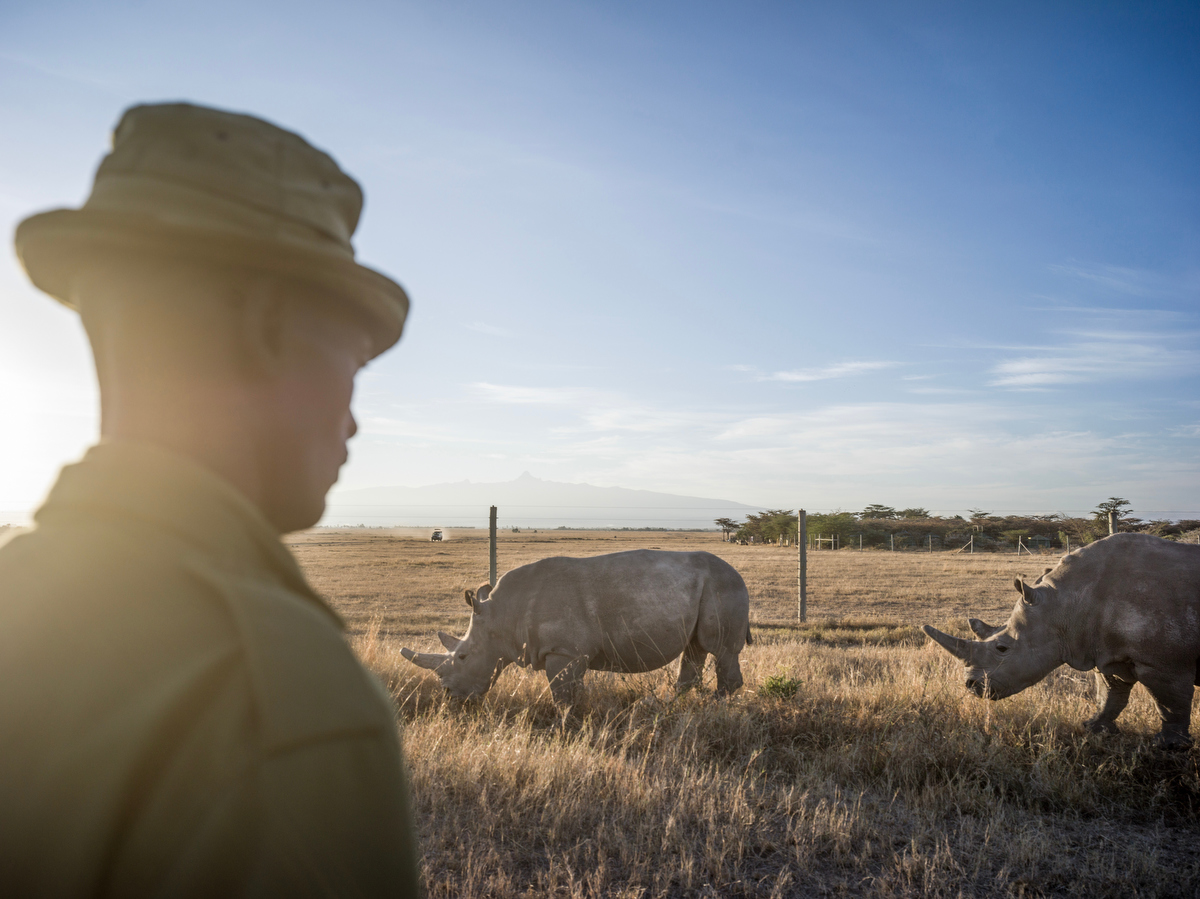 To Serve and Protect_The Last Remaining Northern White Rhinos_by Justin Mott_078.JPG