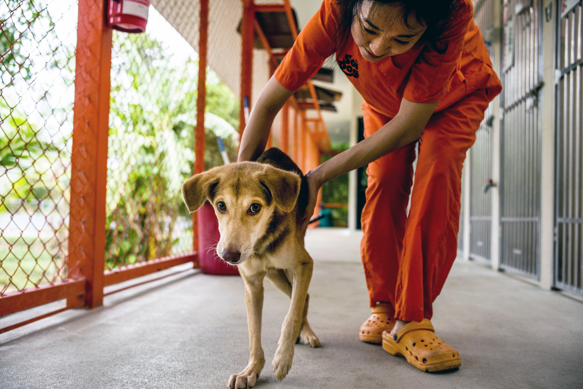 """Aiw Wongla, 26, started working in the Physiotherapy department at Soi Dog in 2016. She read their mission statement and was very impressed. She says """"I didn't know we have such an organization in Thailand. I always loved the street dogs in my hometown and already at a young age I started playing and caring for them."""""""