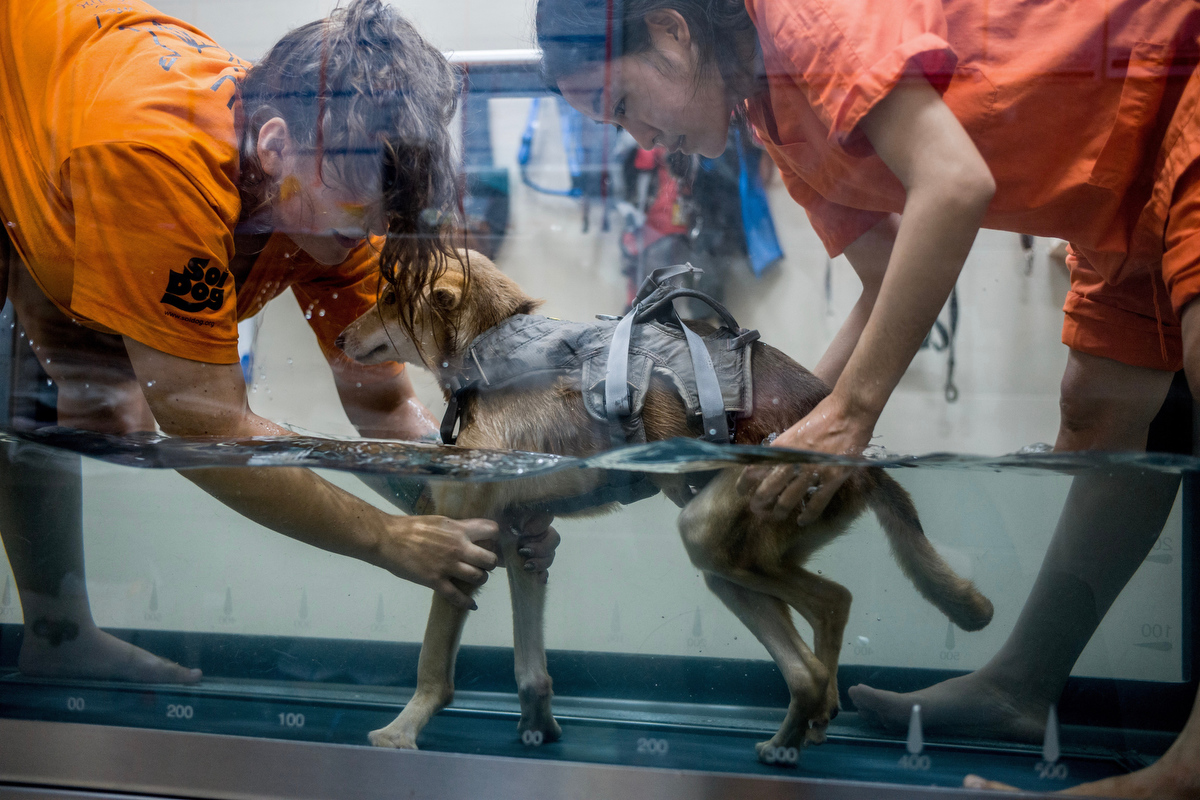 Aiw Wongla(right), 26, and her assistant Marlen Krieger(left), 24, train in the hydrotherapy tank with Jacosta, a dog paralyzed in both hind legs.