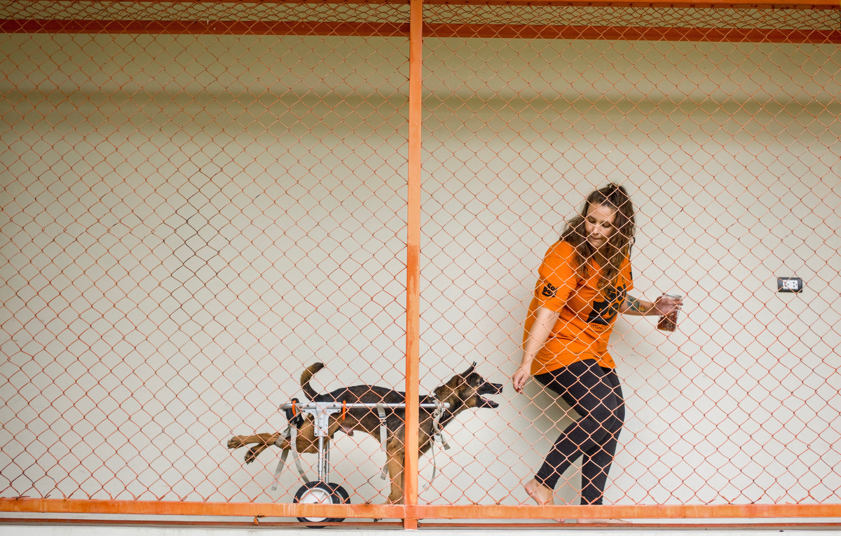 Marlen Krieger, 24, started as a volunteer and eventually joined the staff full-time in the physiotherapy department. Here she is scene training with Fanumpa, a street dog that came to Soi Dog at the age of 3 months paralyzed on both hind legs. Though training with the physiotherapy team he can now race around in his wheelchair.