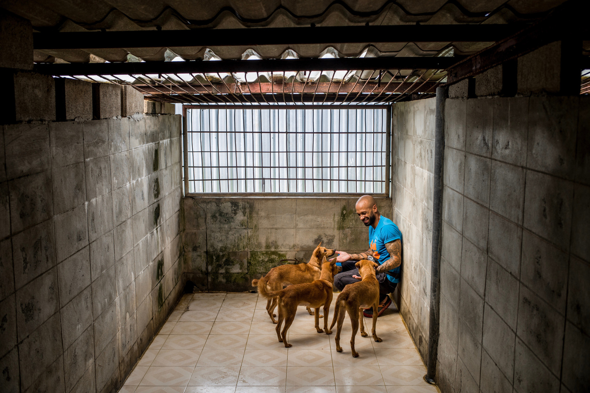 Curtis Brown, Behaviour and Enrichment Manager at Soi Dog check on a group of blind dogs in their kennel.