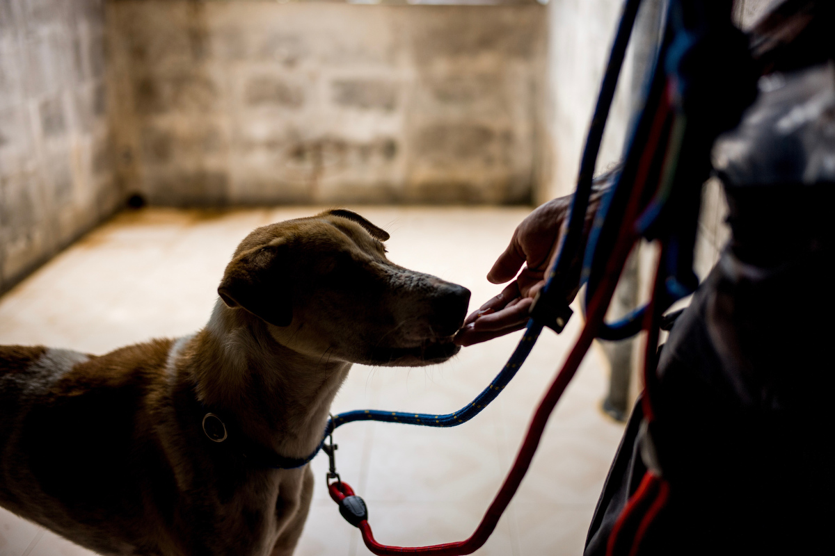 Curtis Brown tests a dogs behavior while he hand feeds him snacks in his kennel.