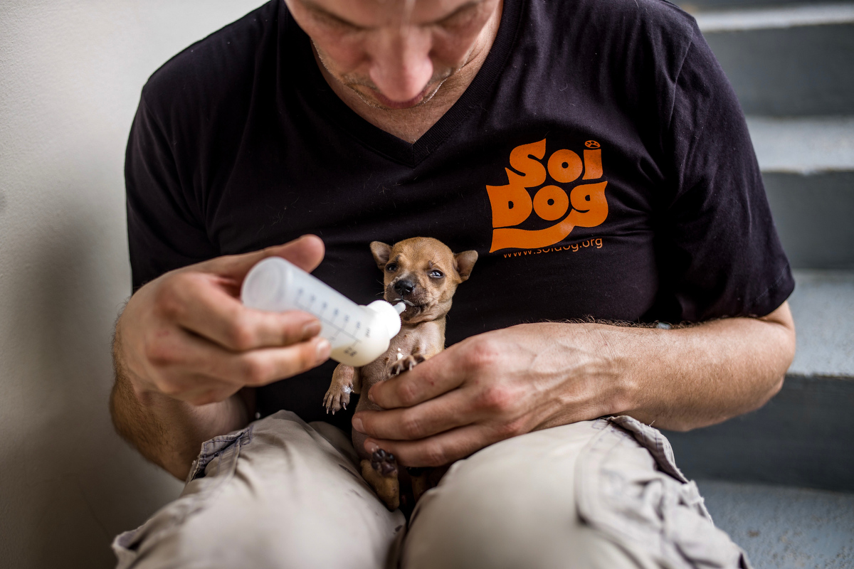 A German tourist hand feeds milk to a puppy he found abandoned at a temple in Phuket, Thailand. He brought the puppy to Soi Dog for sterilization.