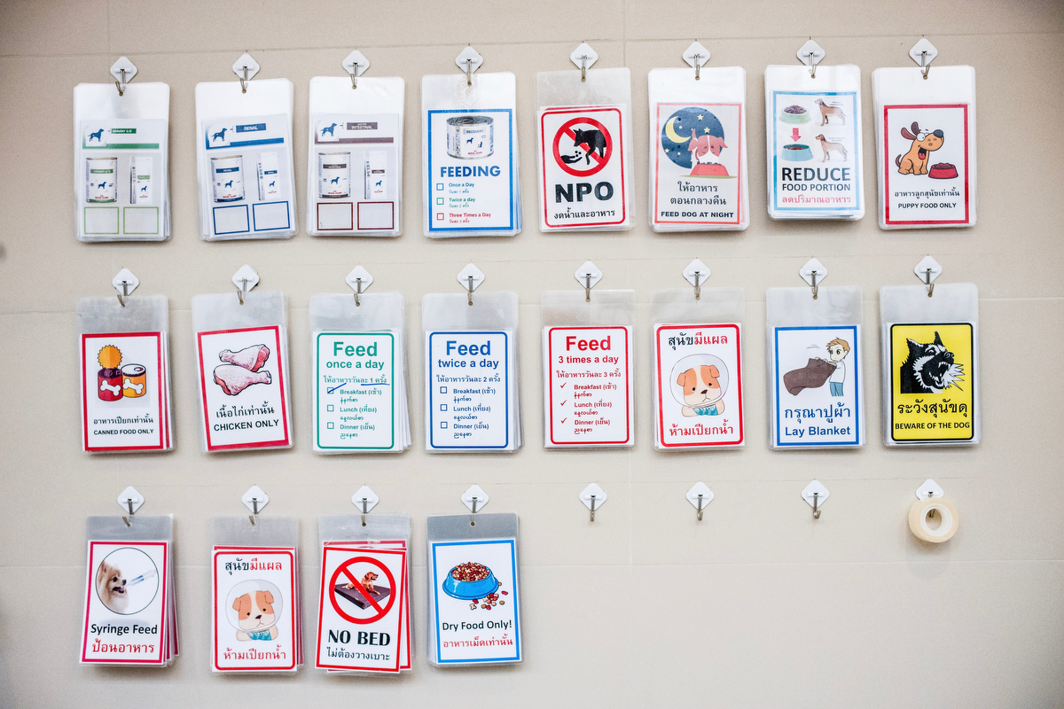 Cards are assigned at each kennel of the recovery unit of the hospital to let the caretakers know of each dogs specific needs.