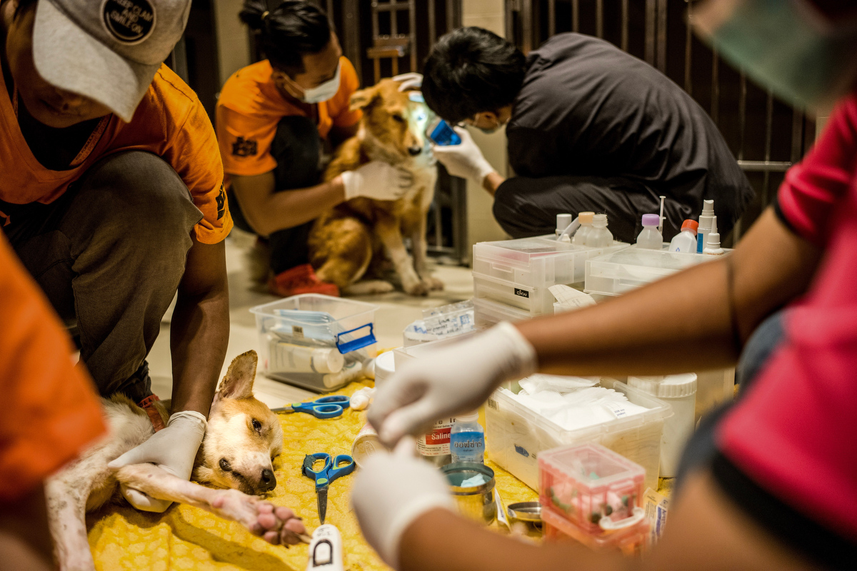 Dogs have their medication distributed, bandages changed, and their general health check on in the intensive care unit.