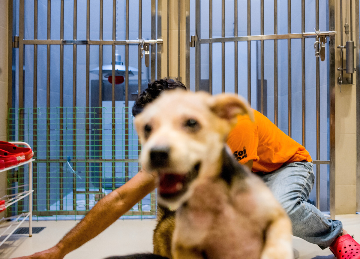 Caretakers looks after and play with the puppies while also preparing them for adoption. Soi Dog offers dogs up for adoption both in Thailand and overseas and helps people in every step of the process.