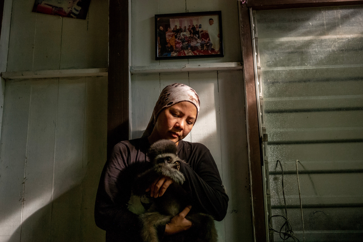 """Bam Ramli, 33, founder of the GPSM (Gibbon Protection Society of Malaysia) holds 9 month-old Cinta at an undisclosed location in Pahang, Malaysia. Cinta was rescued from online traders during a sting operation.  Bam is currently using her own house for the infants because they need constant care and GPSM doesn't have the proper facilities yet. She says """"infants need a warm environment at night and need to be given milk every 4 hours. """""""
