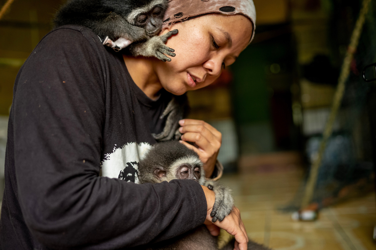 """Bam raises the orphaned gibbons in her home because she says """"Infant gibbons need to feel the support and security of a close relationship in order to gain confidence as they grow up."""""""
