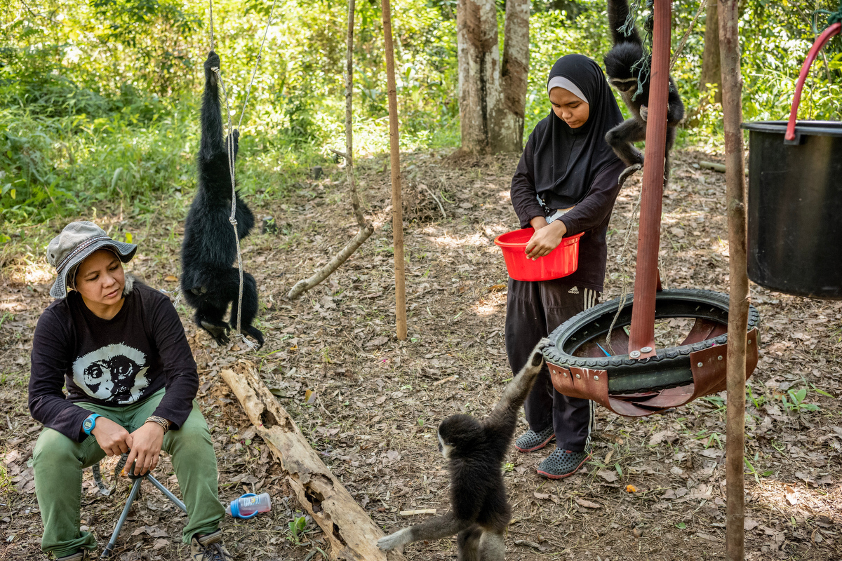 """The goal of the GPSM reads """"Our goal is to educate the public about the threats that gibbons in Malaysia face because of human activities, and the implications of gibbon extinctions. Local people must be given opportunities to learn the importance of these apes to functioning ecosystems in Malaysia so that they can acknowledge and cherish the gibbons for what they are: Malaysia's unforgettable singing apes. """""""
