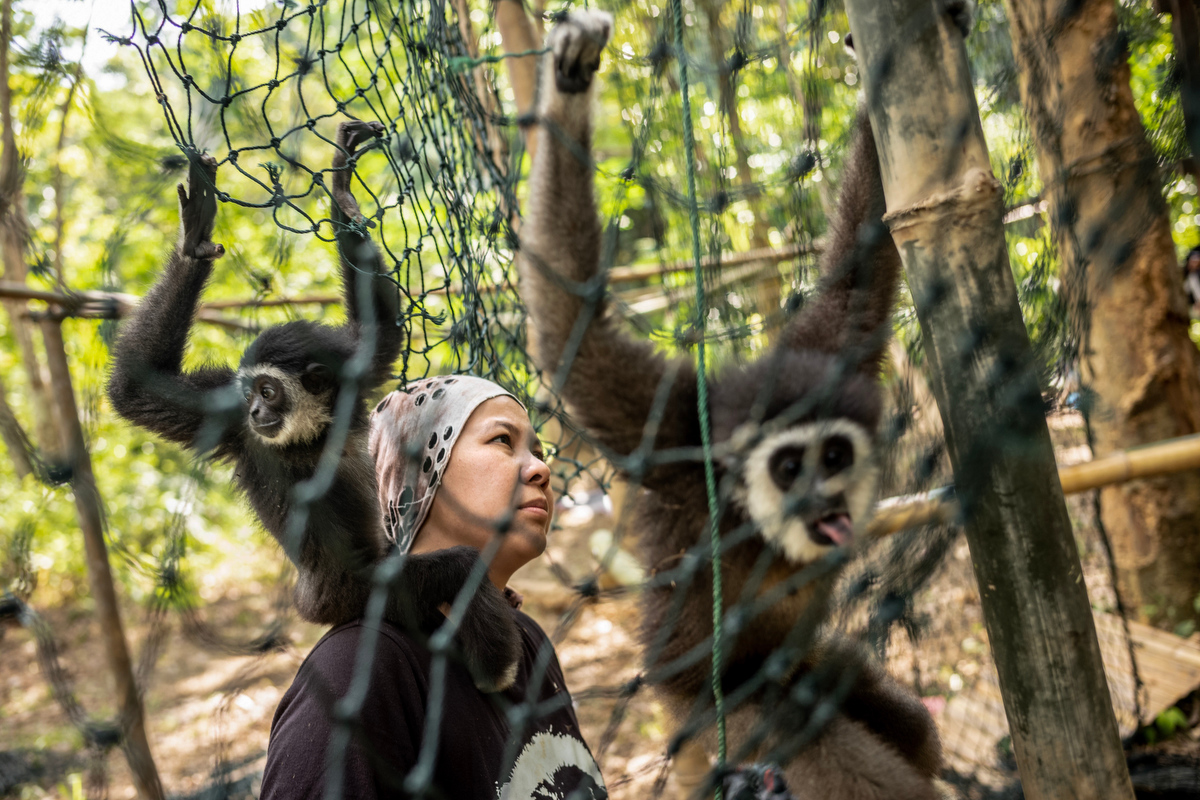 The hardest part of Bam's awareness campaign is making people realize gibbons should not live in captivity and the importance of keeping them in the wild.