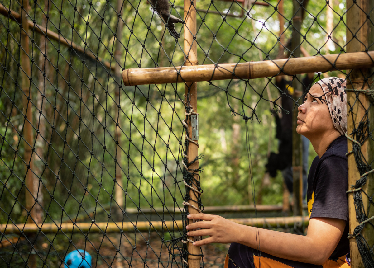 Bam and her team construct a temporary enclosed living area for one of the younger gibbons who is transferring from her home to the jungle as part of the rehabilitation process.