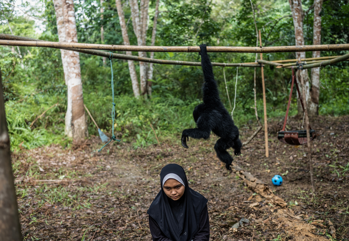 Nrhafizah Sanan, 18, volunteers with the GPSM as a gibbon caretaker.