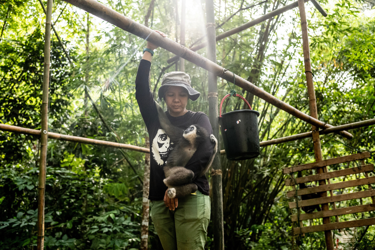 Bam worked as a wildlife ranger for 11 years and has worked with gibbons for 6 years. She is currently the only person doing gibbon rehabilitation in Malaysia.
