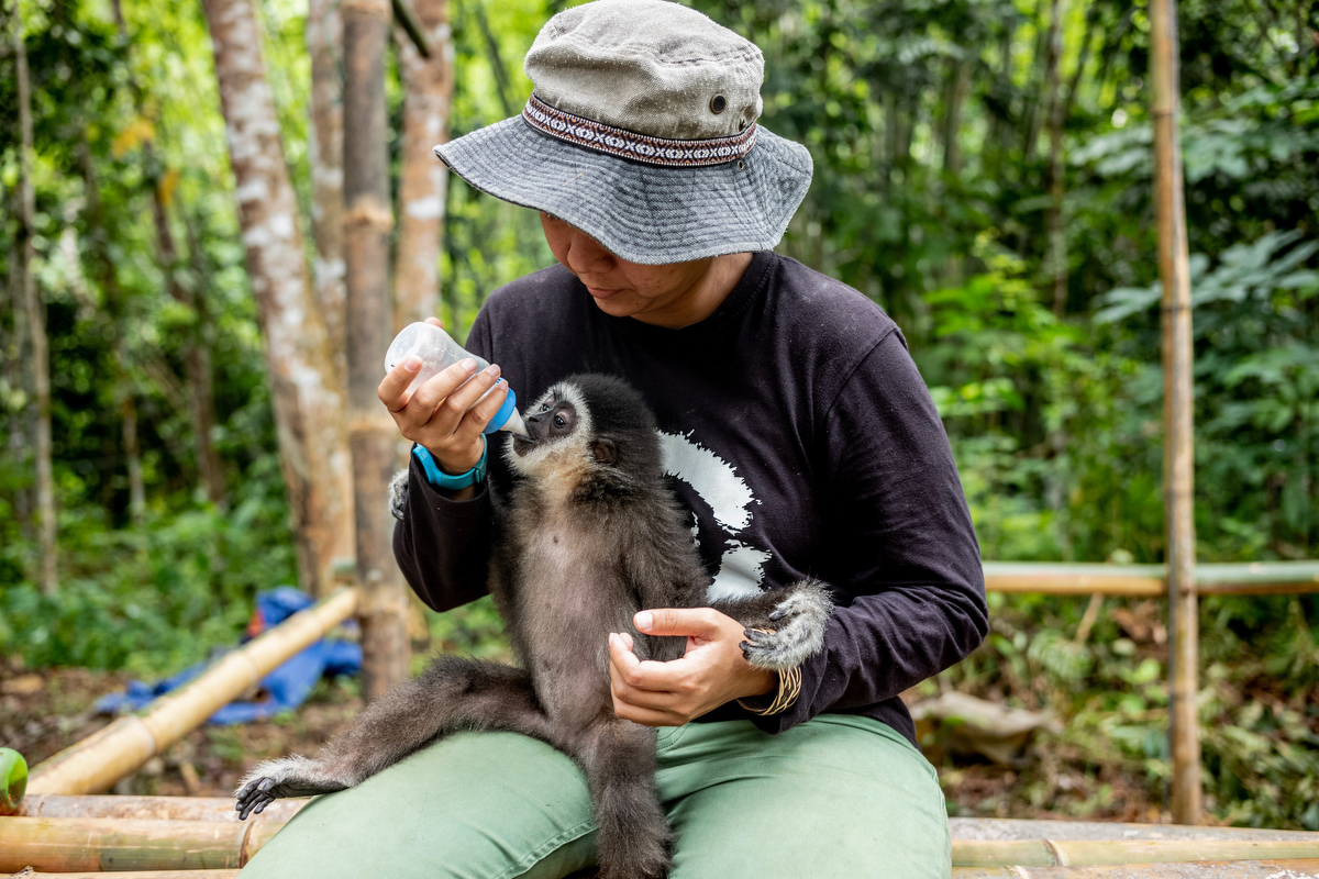 During the rehabilitation process Bam and her team hand feed milt to the infants every 4 hours.