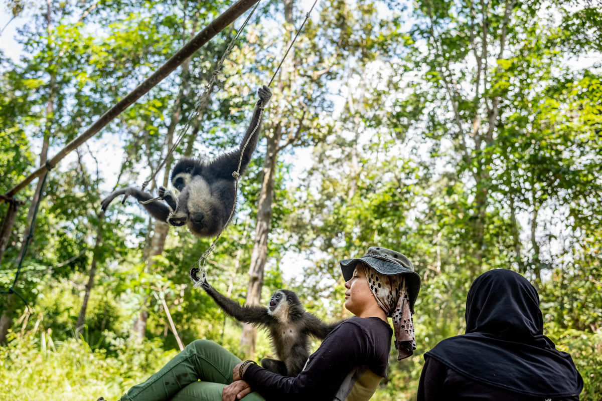 Bam and her team of volunteers look on as her infant gibbons play in the jungle at an undisclosed location in Malaysia.