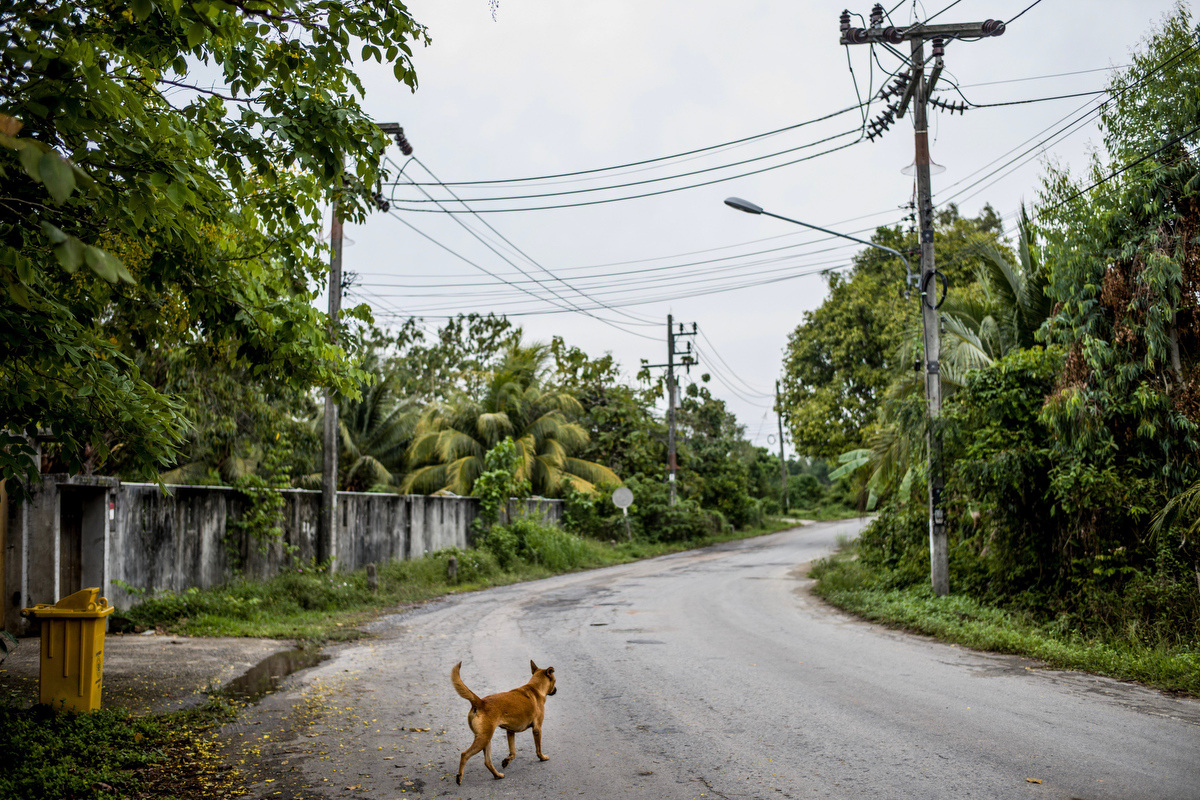 """The mission statement for the Soi Dog Foundation reads """"To improve the welfare of dogs and cats in Asia, resulting in better lives for both the animal and human communities, to create a society without homeless animals, and to ultimately end animal cruelty."""""""