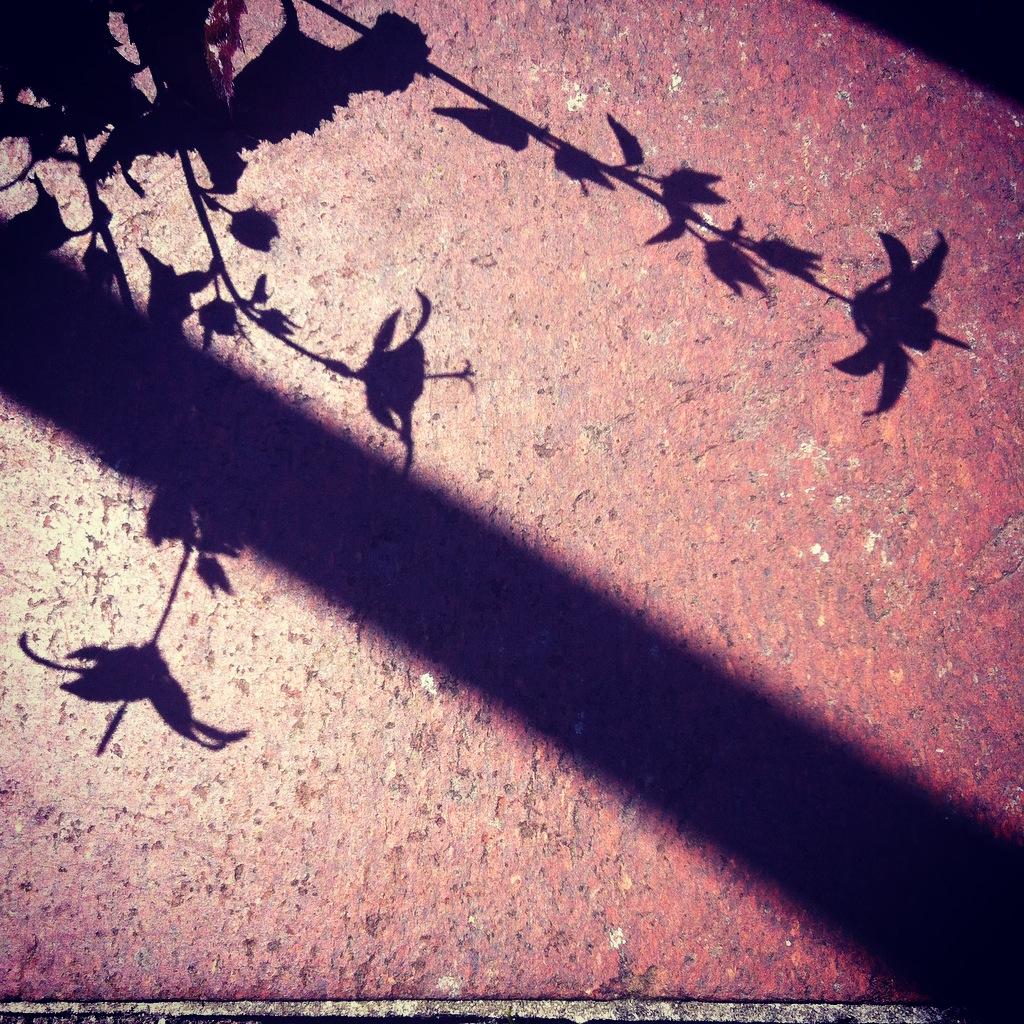 Wendy Ann Greenhalgh Photograph of Shadow.jpg