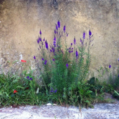 mindfulness wildness and beauty wendy ann greenhalgh