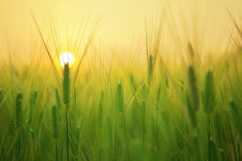field-plants
