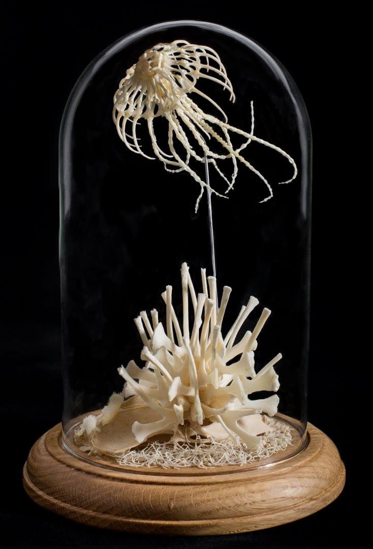Lace Jellyfish #2