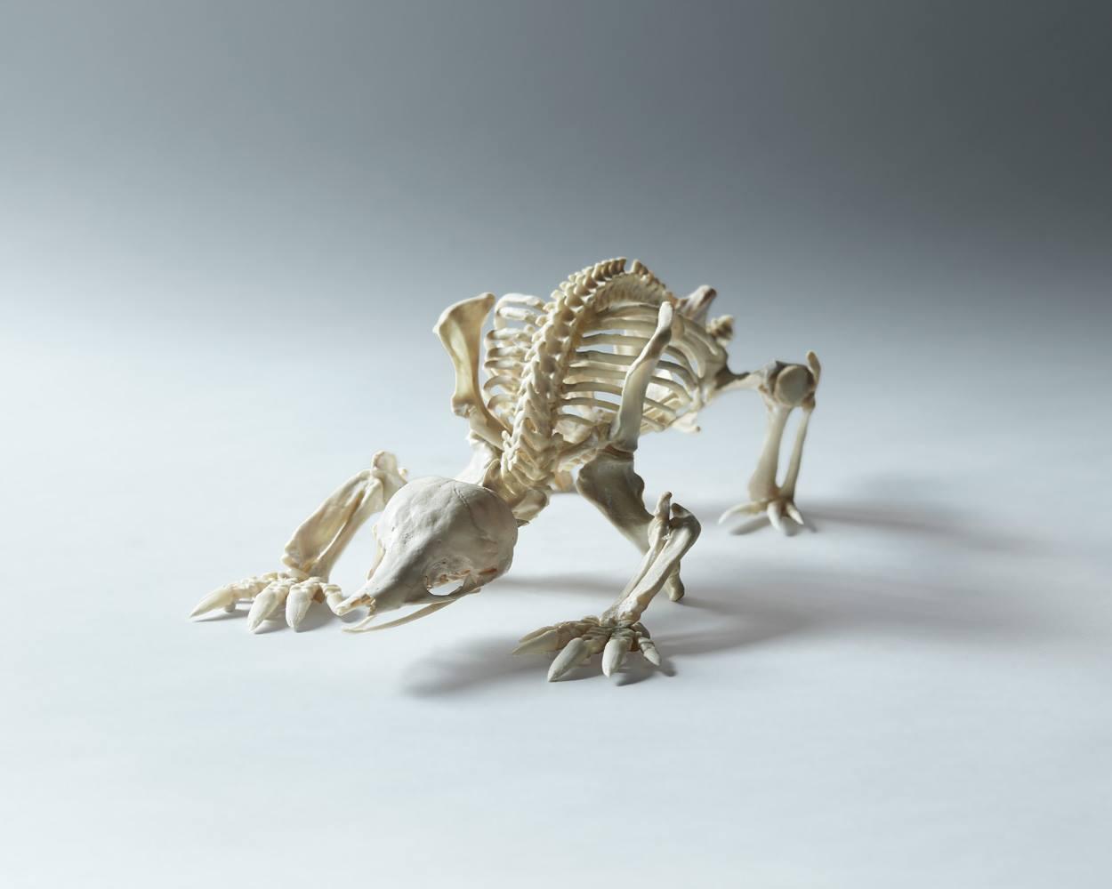 Articulated Echidna