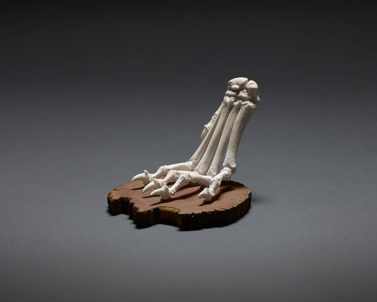 Articulated Dog Paw