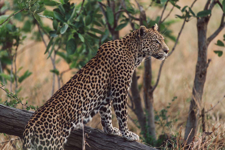 Botswana - Chobe, Savuti, Moremi & The Makgadikgadi Pans