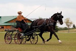 Ann-Moody-Carriage-Driving-300x200.jpeg