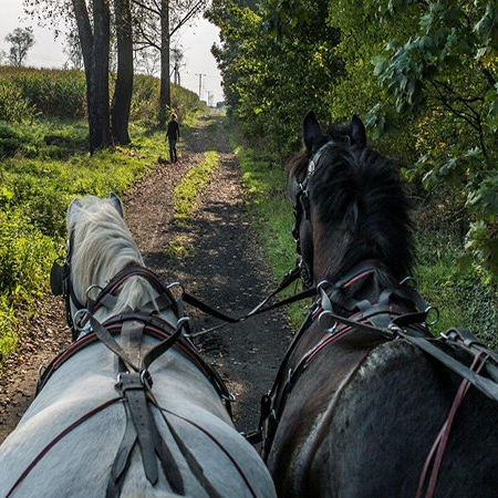 img src=LSCLDolny Slask alt=carriage driving horses in Lower Silesia Country Life.jpg