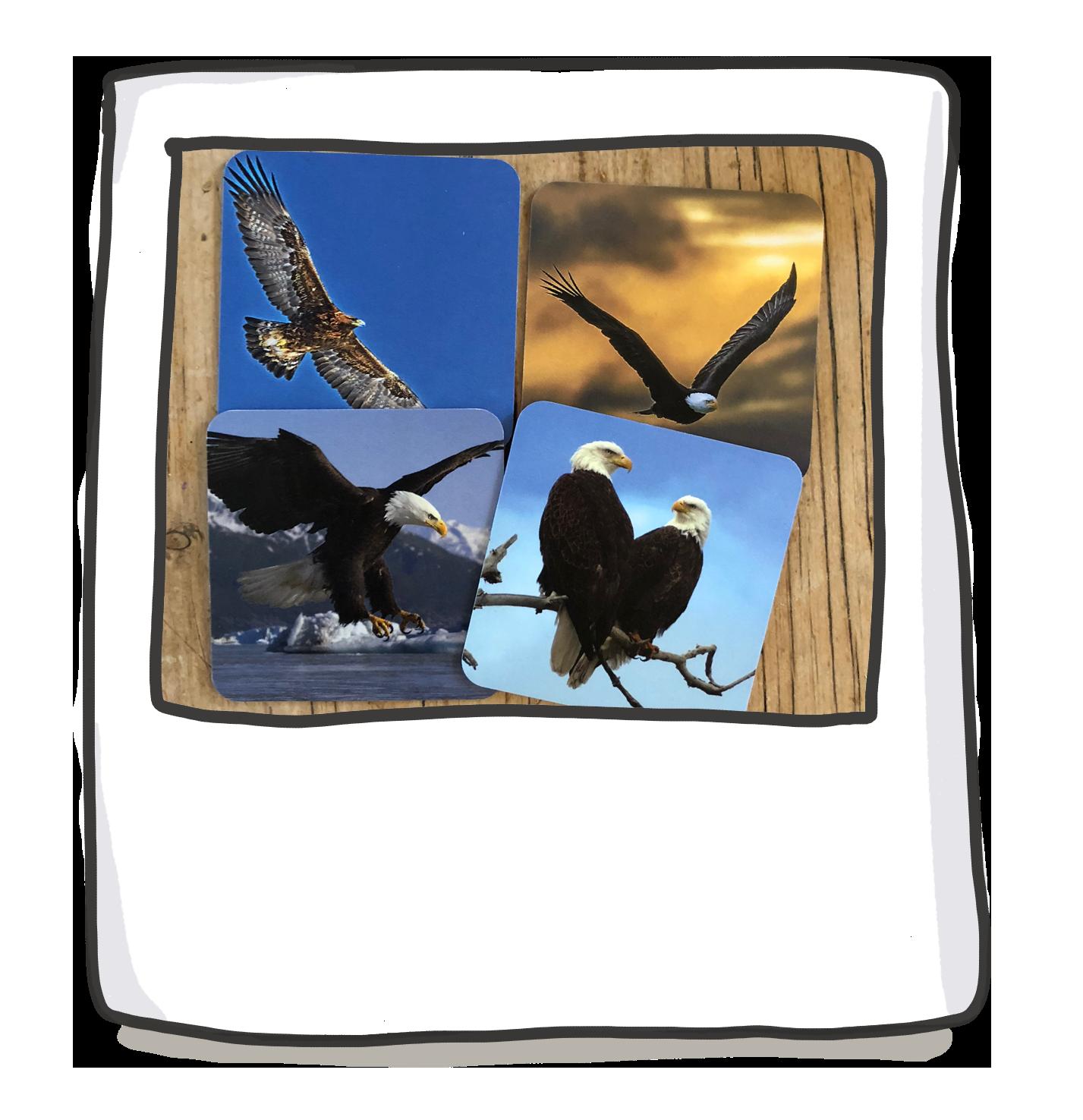 L-R: Eagle; Eagle; Eagle; Eagles -