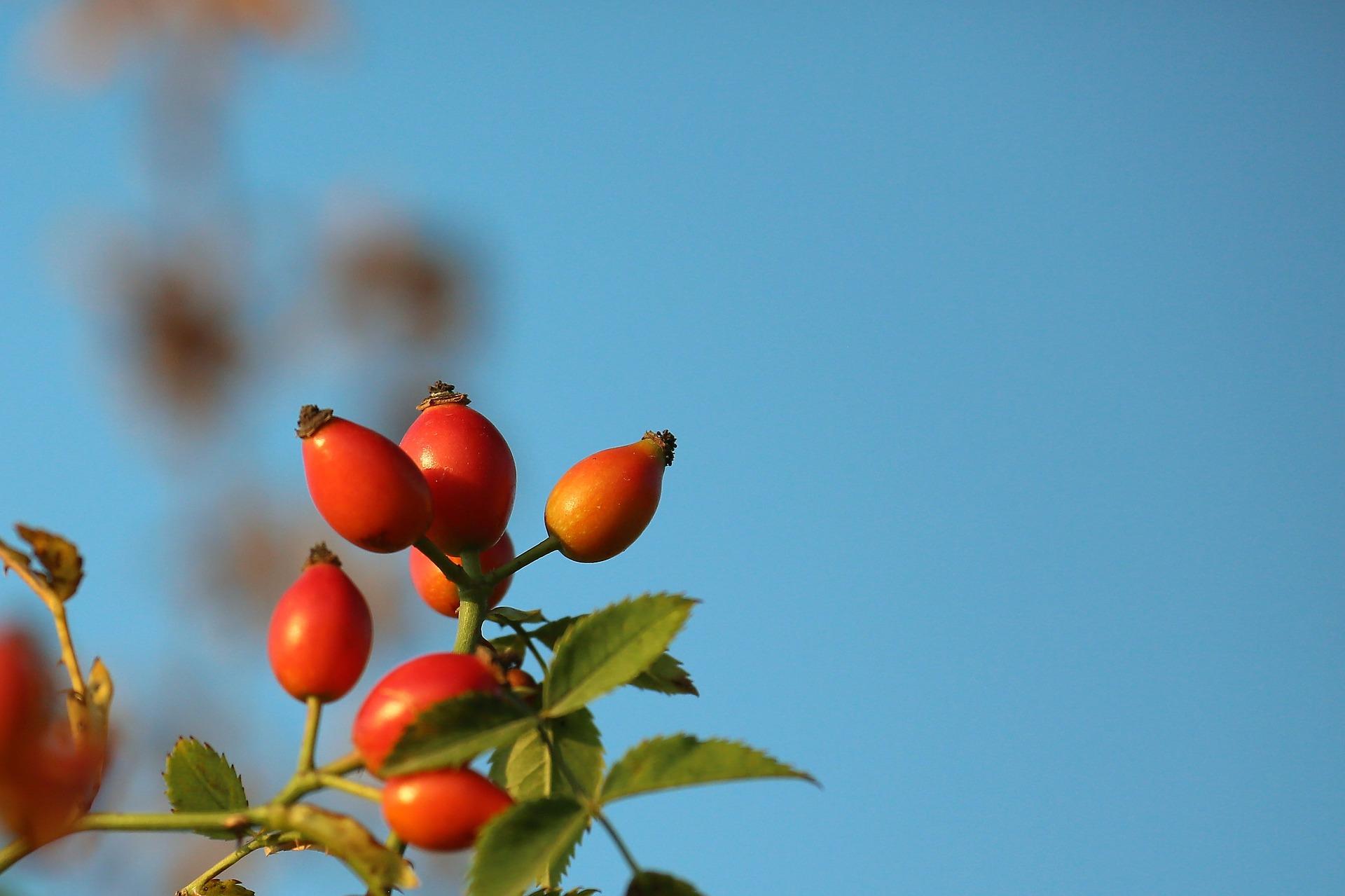 Natural ingredient certification -