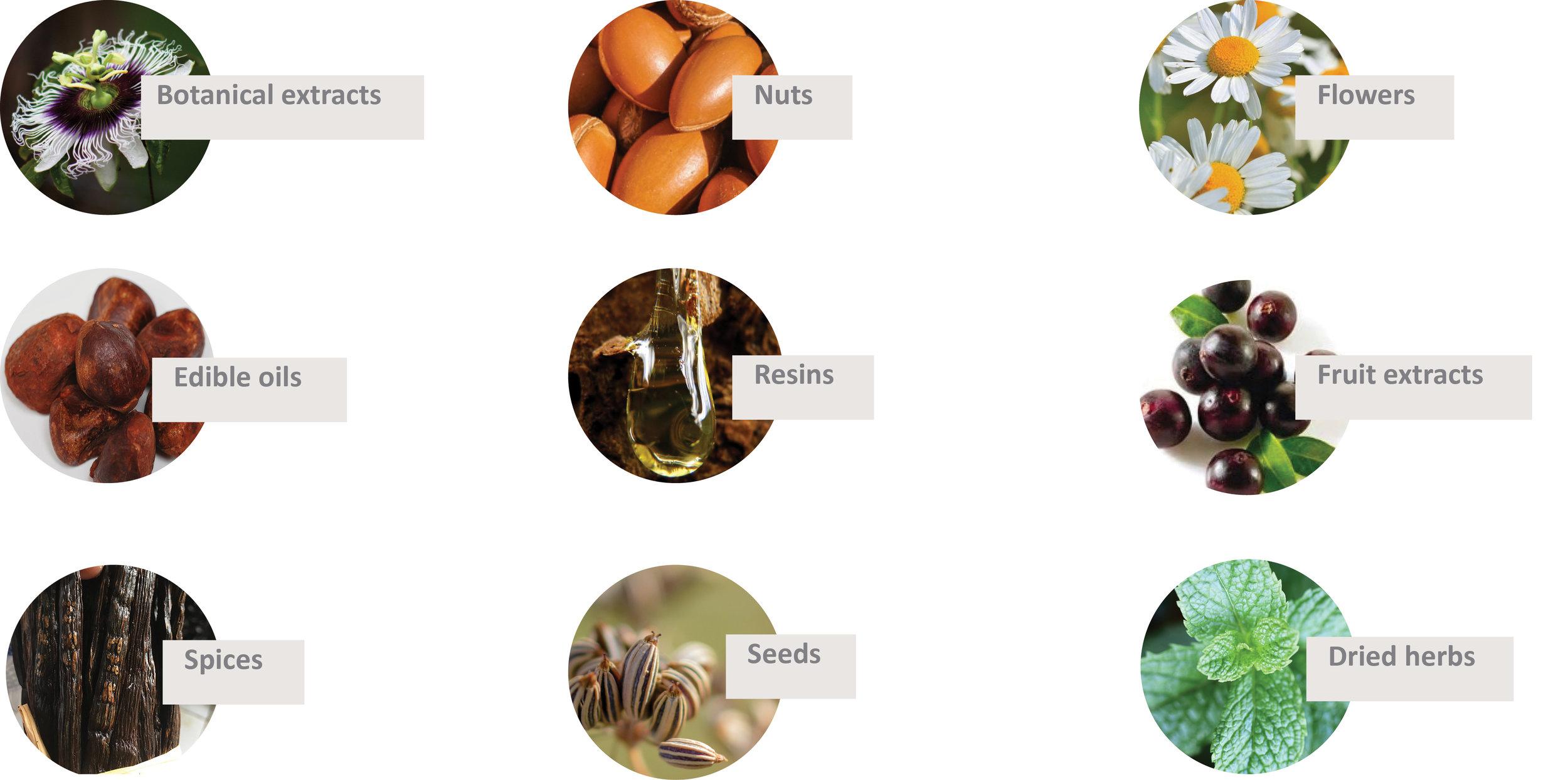 Ingredients3.jpg