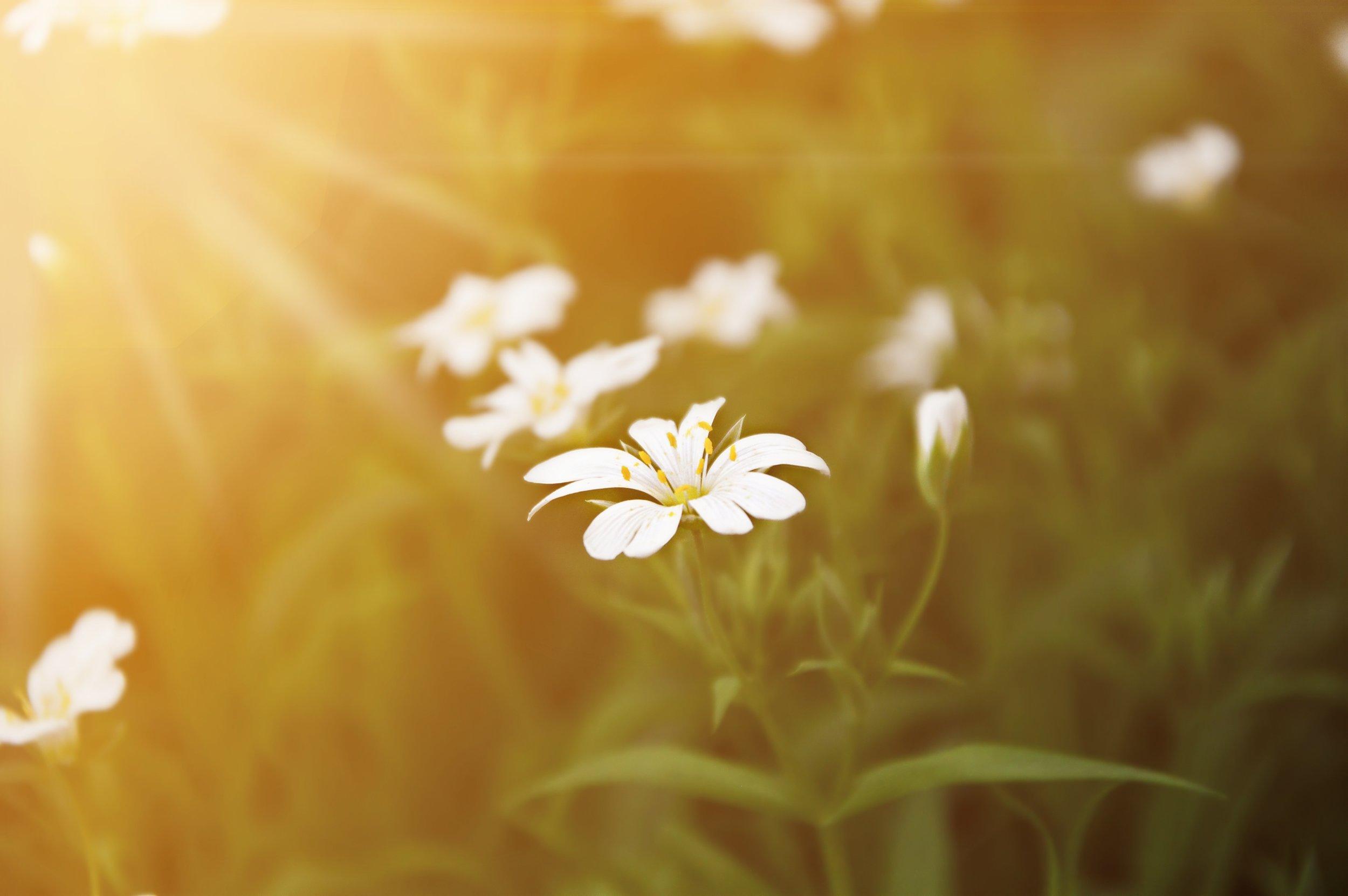 nature-grass-blossom-light-plant-sunshine-1390536-pxhere.com.jpg