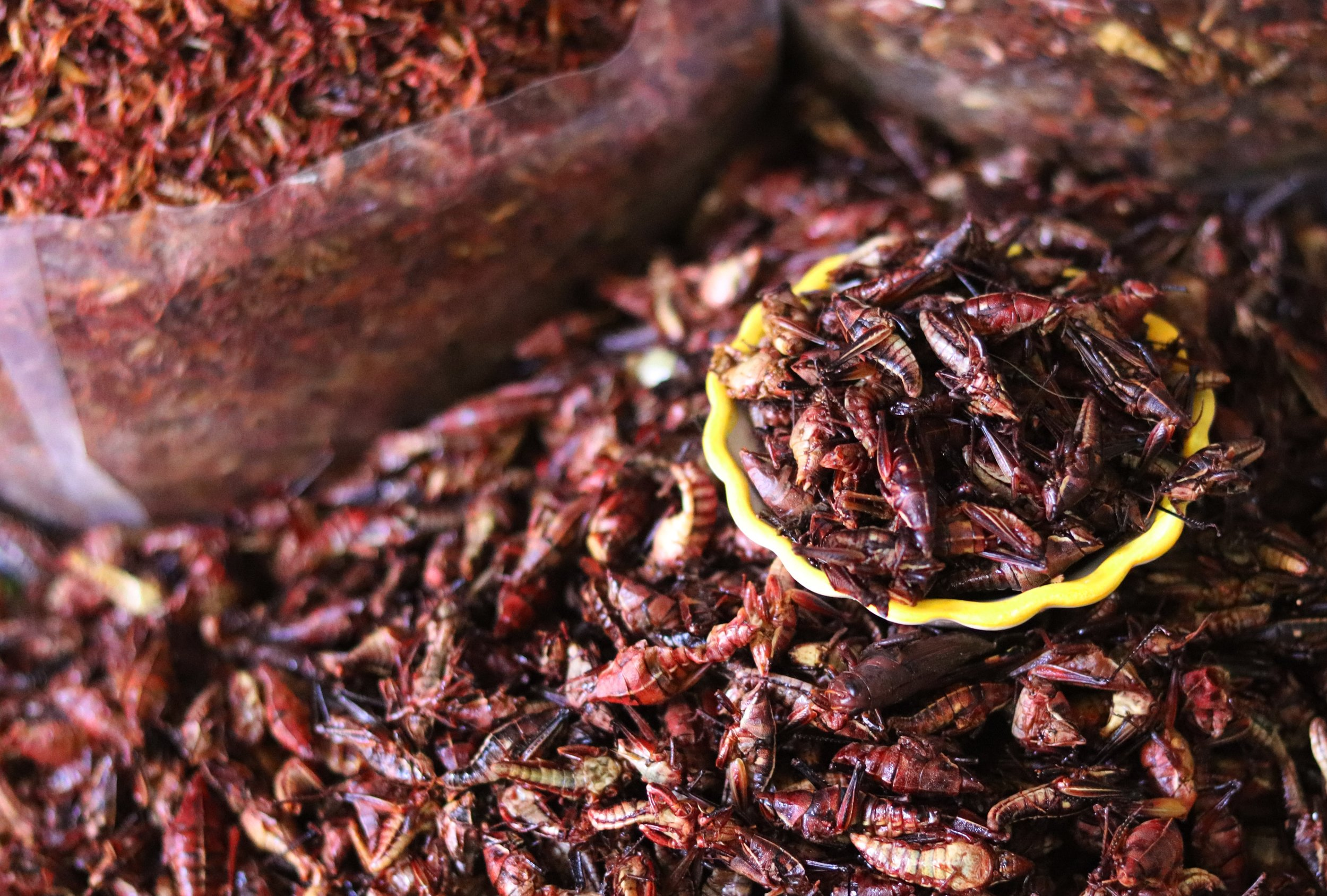is eating insects ethical