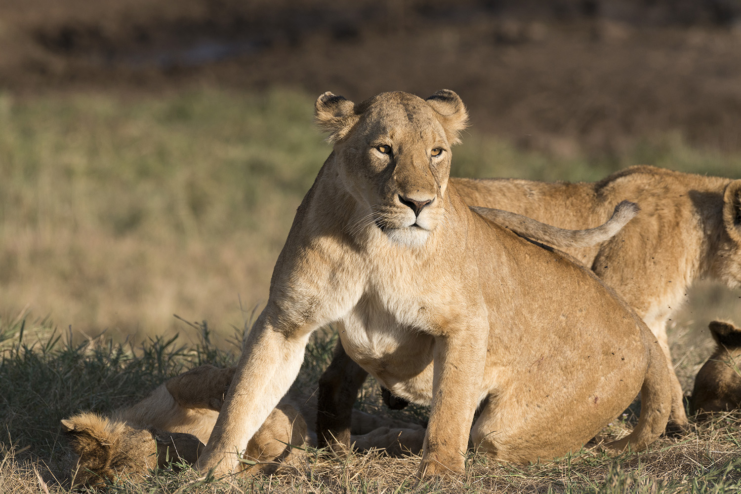 Tanzania has something to offer all year round -