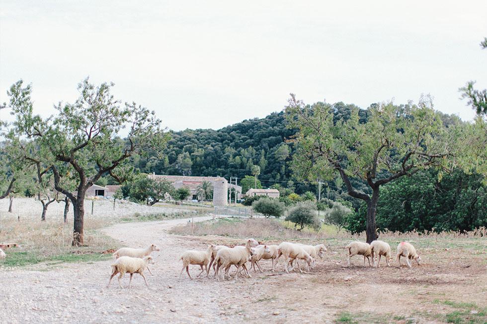 Traumanufaktur_Reisereportage_Mallorca_030.jpg