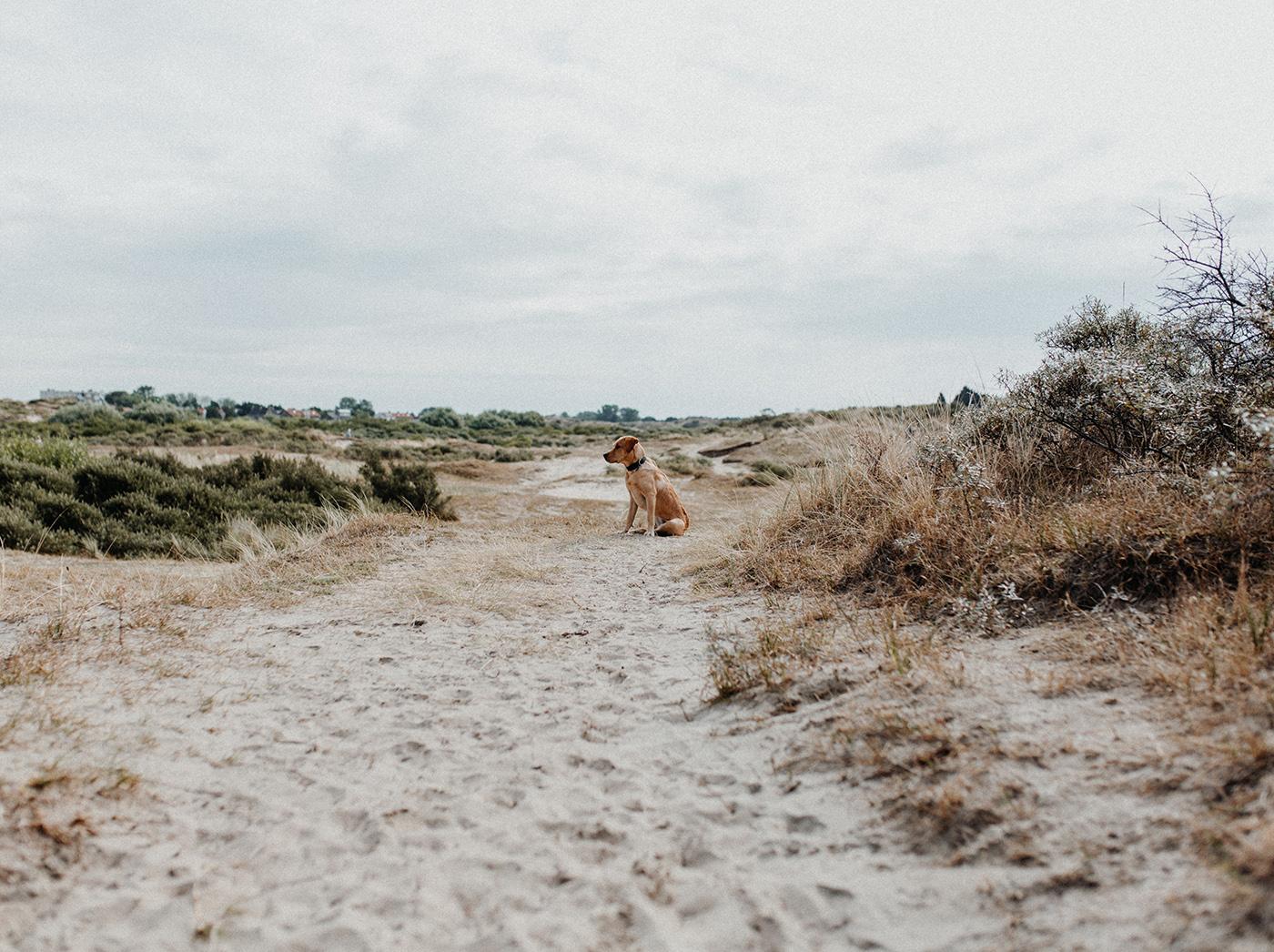 Traumanufaktur_Reisereportage_Niederlande_Zaandvoort_Urlaub_mit_Hund_20.jpg